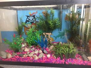 Fish tank with all accessoris