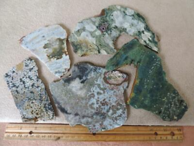 5 SLABS, 1 POUNDS, 7 OUNCES, OF ASSORTED OCEAN JASPER