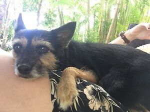 Wanted: House/Pet Sitter Fannie Bay Darwin City Preview