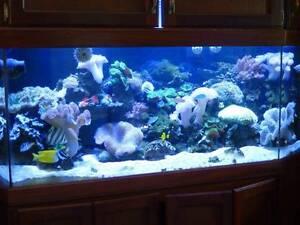 Marine Fish Tank Serpentine Serpentine Area Preview