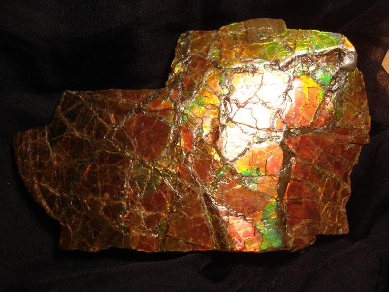 BIG !!! Natural Ammolite Rare Stone 133 mm X 60 mm 396g Display Wooden Rack