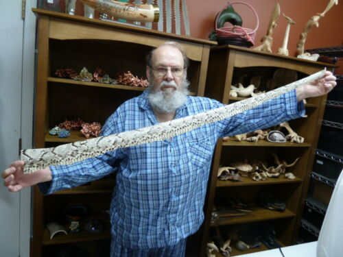 """EL1000-4-3) 47"""" Python Snakeskin snake skin piece hide craft band strap snakes"""