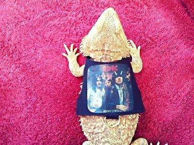 Lil' Bestie Bearded Dragon reptile Harness and Leash AC/DC