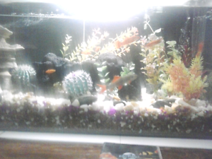 Fish tank n fish Gwelup Stirling Area Preview