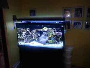 Red Sea Max 500 Marine Aquarium Carine Stirling Area Preview