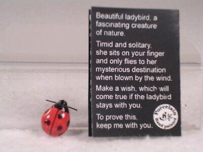 Klima Miniature Porcelain 'Lucky Ladybug' W/Card  Mini Figurine #K4371  RET  NEW