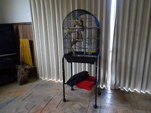 Bird Cage on a stand: to suit Canary Latrobe Latrobe Area Preview