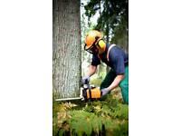 Stihl Tree Service/felling & garden/jetwashing
