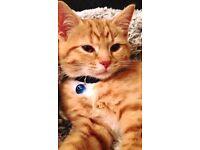 Kitten needs a good home