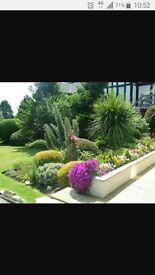 North London Garden services