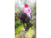13.3hh for part loan