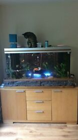 Large Rena fish tank ready to go