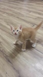 Looking for a kitten like the photo