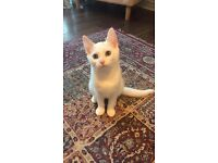 Female Kitten (Miss Kitty) for sale - 3 months old
