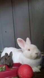 Giant baby bunnies
