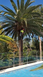 Sydney's clear view tree services Sydney Region Preview
