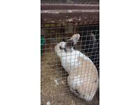 3 rabbits in need of re-homing