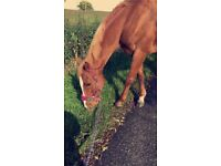 horse for part full loan on own yard