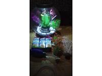 Baby Biorb 15litre aquarium fish tank