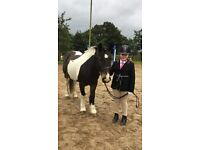 Stunning 13.2hh pony for sale/LWVTB