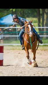 Quarter Horse x Welsh Pony for sale  Cambridge Kitchener Area image 5