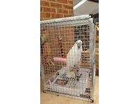 Parrot Travel Cages