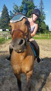 Trail horse for coboard experienced rider required