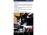 BLACK AND WHITE FEMALE CAT MISSING CADDER