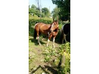two stunning mare part loan