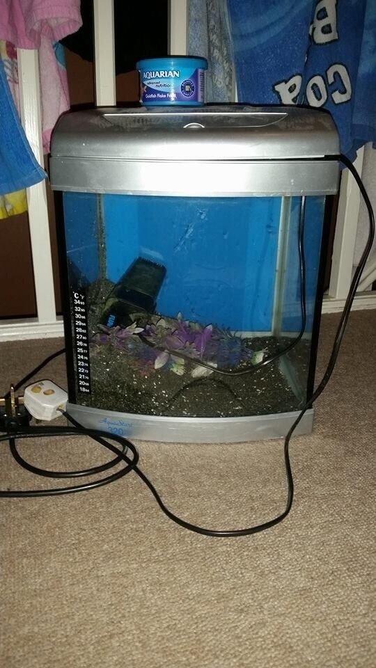 Small fish tank complete set up in erith london gumtree for Small fish tanks for sale