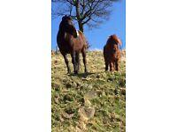 Horse retirement grazing available North Lanarkshire