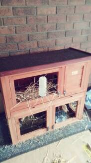 4 guinea pigs with cage and accessories Queenstown Port Adelaide Area Preview