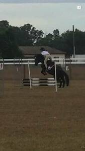 Blacktown Pony Club Sporting and Jumping Competition Shanes Park Blacktown Area Preview