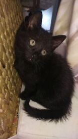 Two lovely kittens for adoption