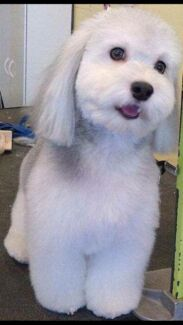 Pampered pooches dog grooming  Rockingham Rockingham Area Preview