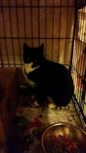 AK1787 : Diddle - CAT for ADOPTION - Vet Work Included Port Kennedy Rockingham Area Preview