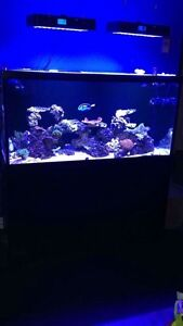 90 gallon aquarium with stand, overflow, sump and glass canopies