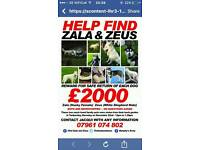 Reward offered £2000