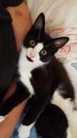 Lovely male kitten for sale in East London