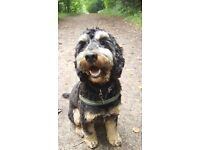 Dog walker / walking - Day care - Boarding - licensed by Bristol City Council