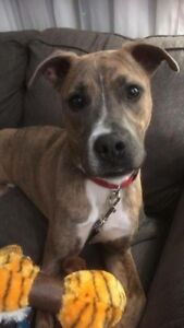 Available for adoption - petrillo