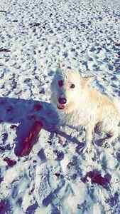 Stolen Dogs $3000 REWARD!!! Kallaroo Joondalup Area Preview