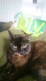 Home wanted for much loved cat