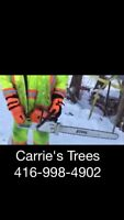 Tree Removal and Trimming - Arborist
