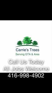 Tree Trimming Removal Company - Arborist