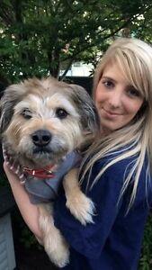 Qualified Vet nurse dog walker Richmond Yarra Area Preview