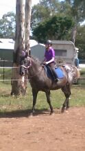 Super pony with gear Walloon Ipswich City Preview