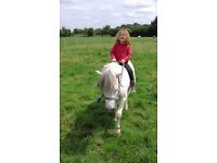 1 horse and 2 ponies for part loan