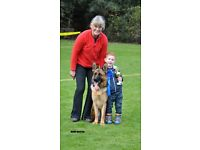 Mountquhanie Dog Walker , Dog Walking, Daycare, Training.