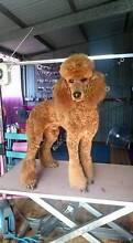 Rosie's Dog Grooming Heathridge Joondalup Area Preview